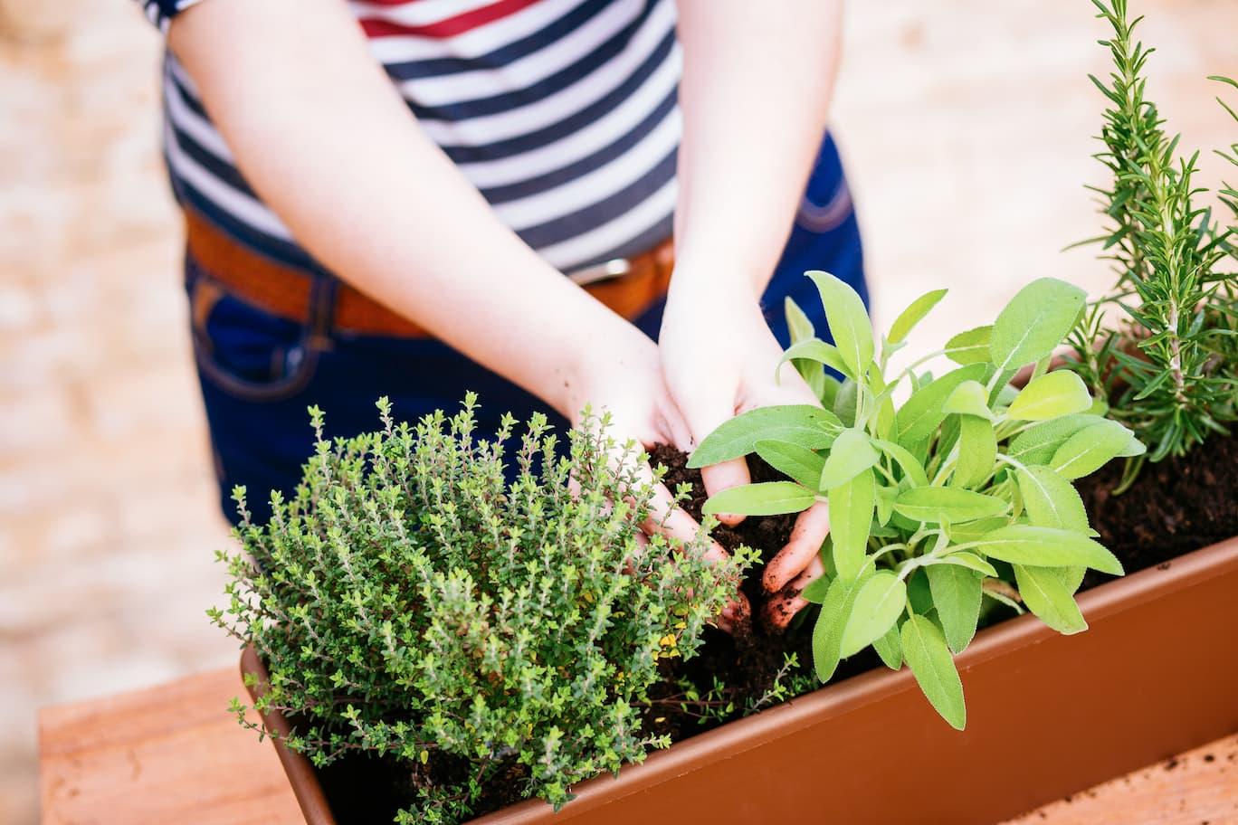 plantas aromaticas terraza