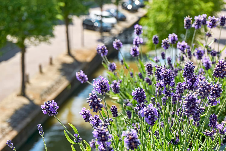 Plantas aromaticas para terraza